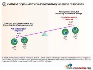 Balance of pro and anti-inflammatory immune responses