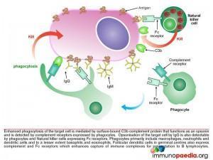 mlb-pathway-9