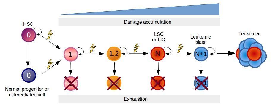 Model of pre-leukemic evolution of leukemia