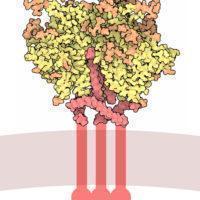HIV Envelope glycoprotein