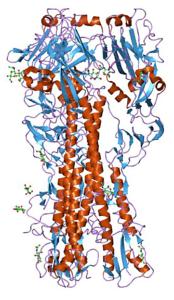 Influenza virus hemagglutinin