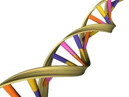 DNA_12