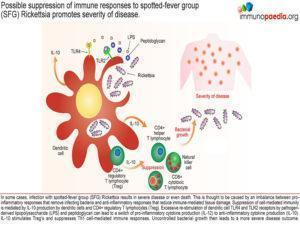 Rickettsia immunity_Page_5.1