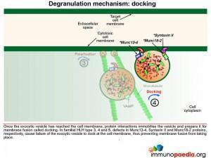 degranulation-mechanism-docking