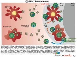 HIV dissemination
