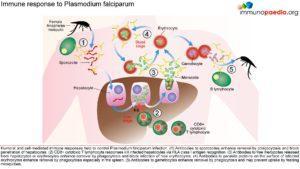 malaria_Page_2