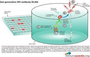 2nd-generation-hiv-antibody-elisa-test