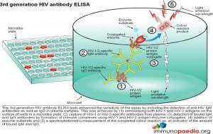 3nd-generation-hiv-antibody-elisa-test
