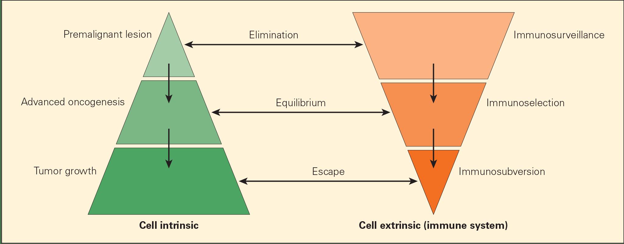 three Es of cancer immunoediting