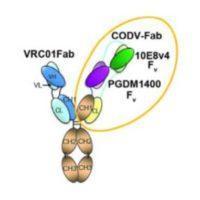Trispecific antibody against HIV