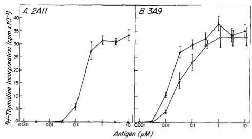 H-2k and I-Ak molecules
