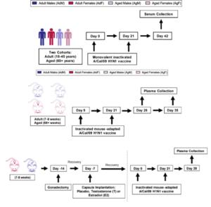 Illustration of Human and Murine experimental plan used in Portluri et al.,. (Source: Portluri et al., 2019)