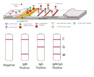 Graphical illustration of serological test developed by Li et al., 2020